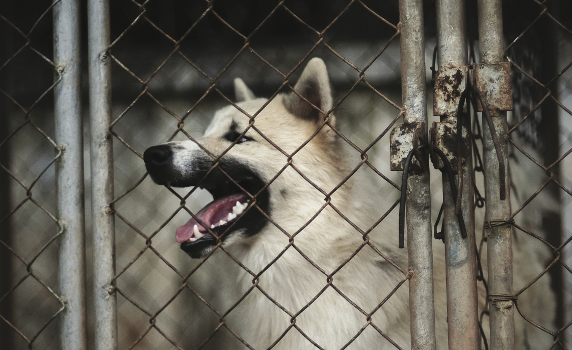 Organized dogfighting is a growing problem: Part one - Blue Line